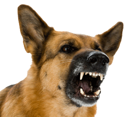 Prevent Infection From Dog Bites